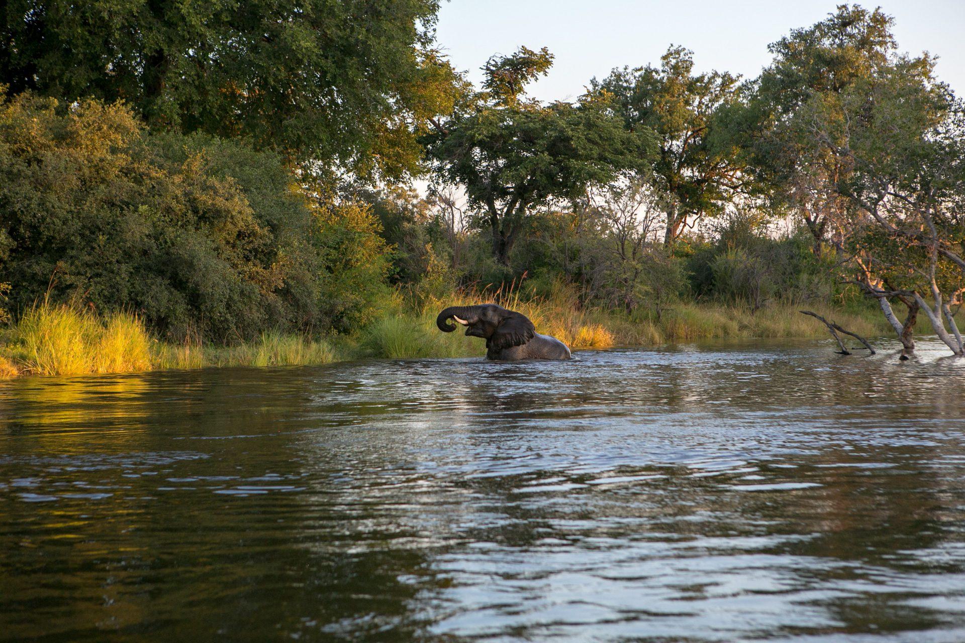 Botswana, Elefant, Okavango, Wasser
